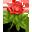 иконки rose, роза, цветок,