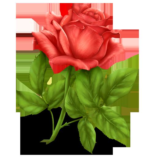 иконка rose, роза, цветок,