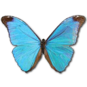 иконки  Morpho Absoloni, бабочка, butterfly,