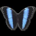 иконка Morpho Achilles, бабочка, butterfly,
