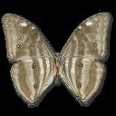 иконка Morpho Adonis Huallega Bottom, бабочка, butterfly,
