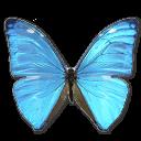 иконки  Morpho Adonis Huallega Top, бабочка, butterfly,