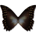 иконки Morpho Amphitrion, бабочка, butterfly,