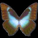 иконки Morpho Cissis, бабочка, butterfly,