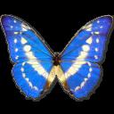 иконки Morpho Cypres, бабочка, butterfly,