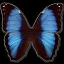 иконки Morpho Deidamia Erica, бабочка, butterfly,