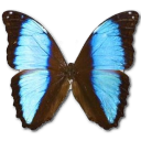 иконки Morpho Deidamia Neoptolomous, бабочка, butterfly,