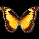 иконки Morpho Diana, бабочка, butterfly,