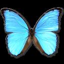 иконки  Morpho Didius, бабочка, butterfly,