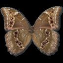иконка Morpho Didius Underside, бабочка, butterfly,