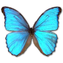 иконки Morpho Godarti, бабочка, butterfly,