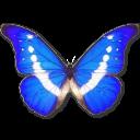иконки Morpho Helena, бабочка, butterfly,