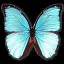 иконки Morpho Menelaus Hubneri, бабочка, butterfly,