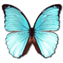 иконка Morpho Menelaus Hubneri, бабочка, butterfly,
