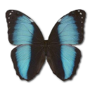 иконки Morpho Patroclus Orestes Male, бабочка, butterfly,