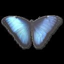 иконки Morpho Peleides, бабочка, butterfly,