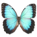 иконки Morpho Peleides Montezuma, бабочка, butterfly,