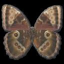 иконки Morpho Peleides Montezuma Underside, бабочка, butterfly,