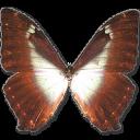 иконки  Morpho Phano Blue, бабочка, butterfly,