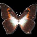 иконки Morpho Phano Red, бабочка, butterfly,