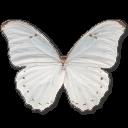 иконка Morpho Polyphemus, бабочка, butterfly,