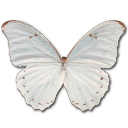 иконки Morpho Polyphemus, бабочка, butterfly,