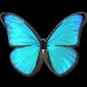иконки Morpho Rhetenor Cacica, бабочка, butterfly,