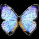 иконка Morpho Sulkowski Pearl Morpho, бабочка, butterfly,