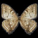 иконки Morpho Sulkowski Underside, бабочка, butterfly,