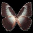 иконка Morpho Telemachus, бабочка, butterfly,