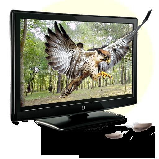 иконки 3D Eagle, орел, телевизор, 3д,