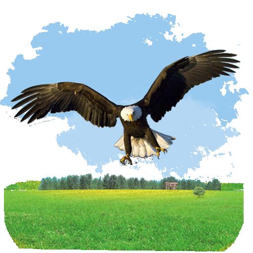 иконки animals, eagle, животные, орел, птица,