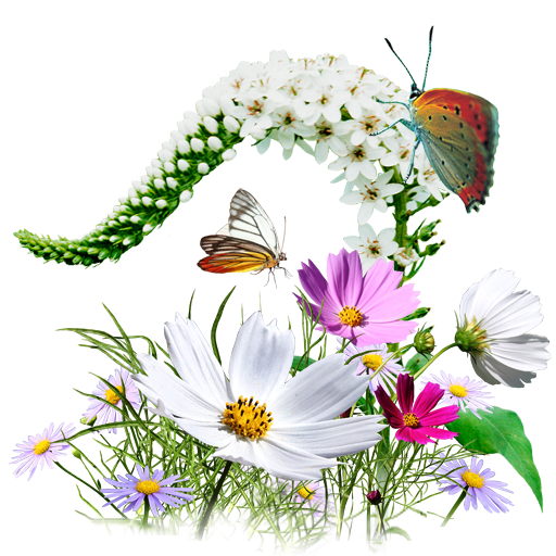 иконки flowers, wildflowers, цветы, букет, бабочки, бабочка,