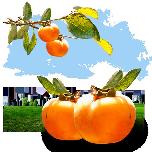 иконки fruits, persimmon, хурма, фрукт, фрукты,