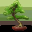 иконки baobab, дерево, tree, бонсай,