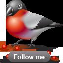 иконки bullfinch, следуй за мной, птичка, птица, bird,