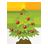 иконка Christmas Tree, рождественская елка, елка, новый год,