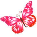иконки бабочка, насекомое, butterfly,