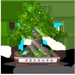 иконки бонсай, дерево, природа, bonsai,