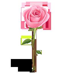 иконки роза, цветок, rose,