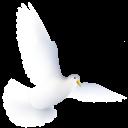 иконки птица, птичка, голубь, dove,