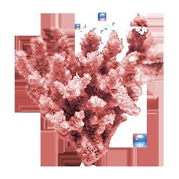иконки коралл, coral,