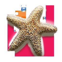 иконки морская звезда, star,