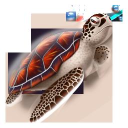 иконка черепаха, животное, turtle,