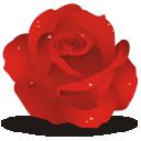 иконки роза, цветок, цветы, rose,