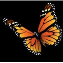 иконки бабочка, насекомое, природа, schmetterling,
