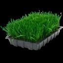 иконки лоток, трава, рассада, wheatgrass tray,