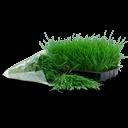 иконки трава, рассада, растение, wheatgrass,