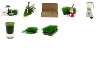 Wheatgrass Icons by Frozen Wheatgrass